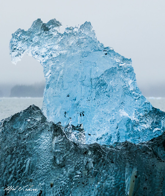 Ice Elephant Seal - HFF