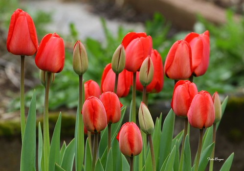 FLOWERS 08042012 099 by fotobogus