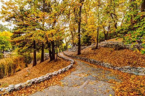 california trees landscape path fallcolors idyllwild highdynamicrange lakefulmor sdosremedios size2x3 ©stevendosremedios
