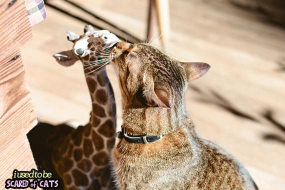 cat_kissing_giraffe