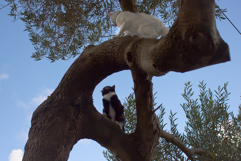 Friday, May 24: I spy a cat in the tree and pull out my camera when suddenly it's joined by a second cat and the hissing and paw batting starts. Must run, I'm already late for work.