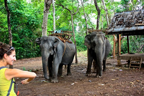 Lina saying hello to the elephants. They were last seen giving rides to a local family around the waterfall area