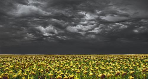uk morning sky cloud storm france field canon landscape eos dawn interestingness gallery britain explore sunflower 5d lightning agriculture loire thunder wfc alpenglow 24105 explored wentloog welshflickrcymru stevegarrington undulatusasperatus