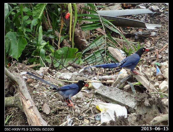 20130615_Birds