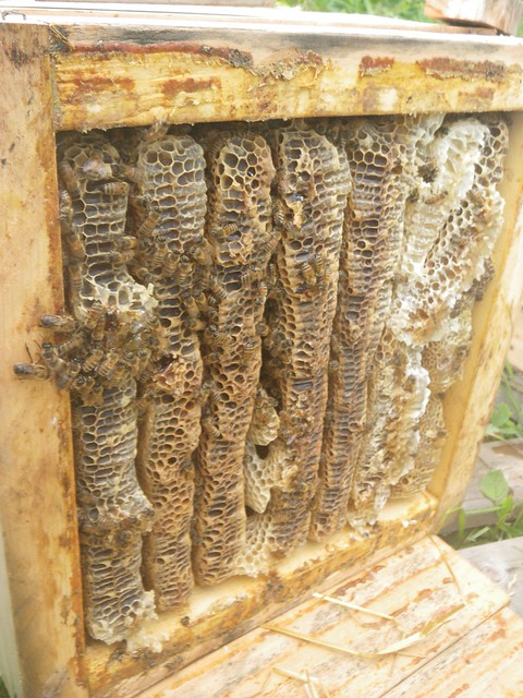 top box filled with honey