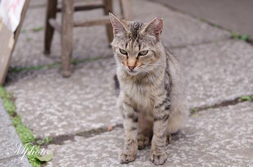 川越 貓咪1