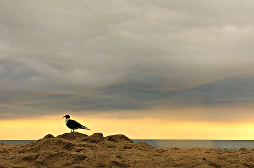 morning light summer vacation bird rain clouds nc sand seagull sony kurebeach beachscape nex flipmode79 nex5n