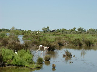 045 flamingo's