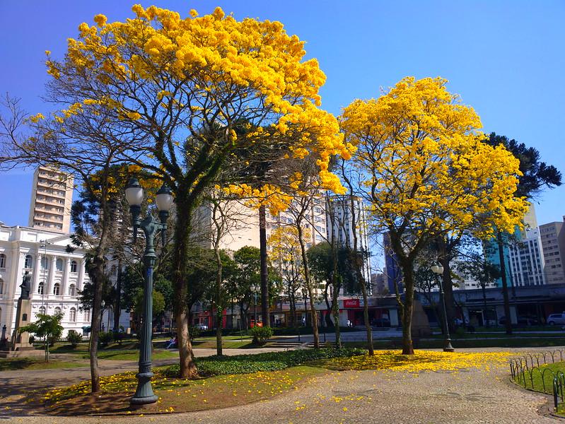 Curitiba * Brazil - Page 4 - SkyscraperCity