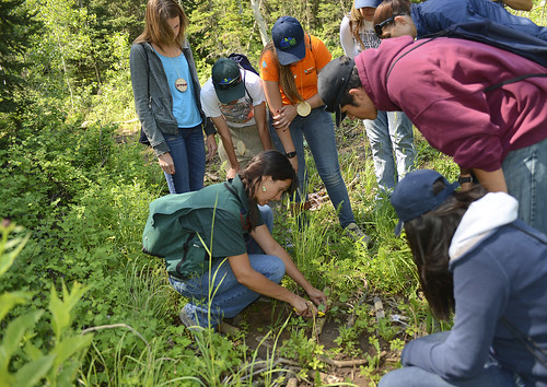 U.S. Forest Service Entomologist Danielle Reboletti uncovers forest insects for Nature High Summer Camp participants during an in-field resource learning session with agency resource professionals. Photo by Stacey Smith, BOR. Photo used with permission.