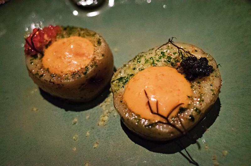 sea urchin @qui