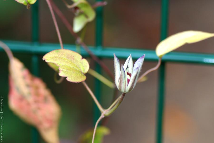 In my garden