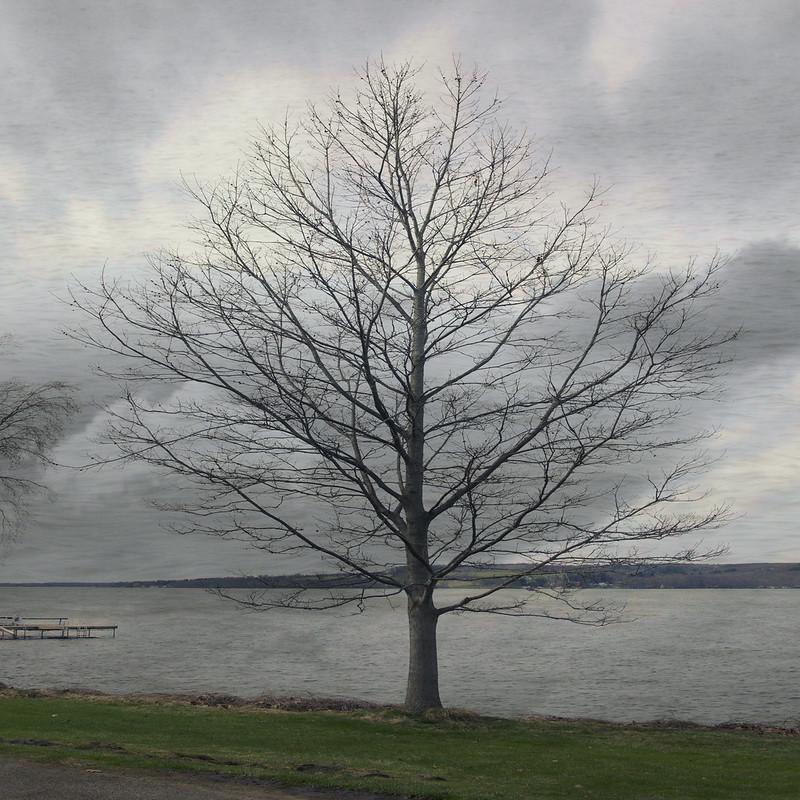 IMG_9299 Tree and Lake Composite