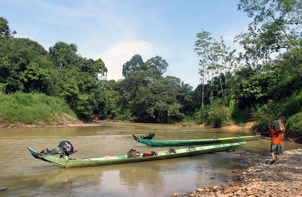 sejltur gennem Borneos jungle