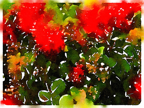 Bottle Brush Plant Edited in Waterlogue Photo App Using the 'Colour Bloom' Style