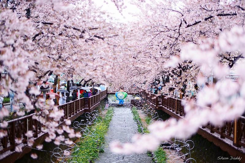 Sakura Figure