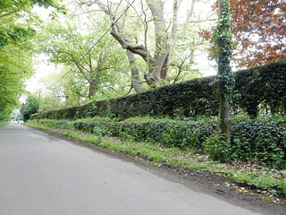 Long wall with tree