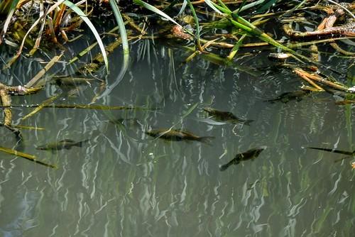 fish lake park europe nikond5300 1855mmf3556 basiclens риба юженпарк софиябългарияевропа никонд5300 китовобектив изкуственоезеро