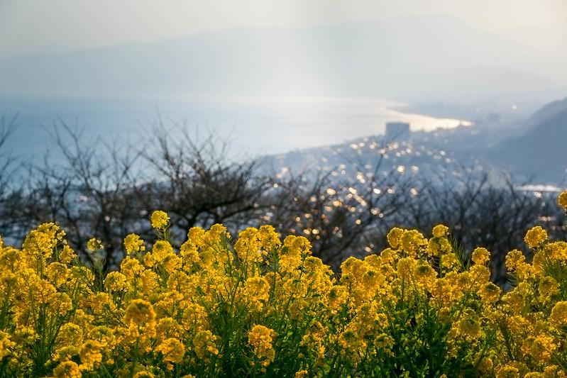 20150211-曽我丘陵-0316.jpg