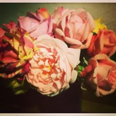 Les derniêres roses de l'année ! This years' last roses! De laatste rozen van dit jaar... #ochtendboeket #morningroses #roses