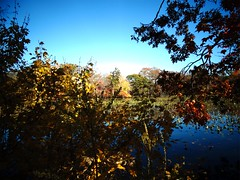 Mill Pond Park -- Autumn (69)