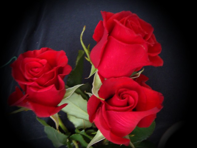 Mis rosas, Sony DSC-W230