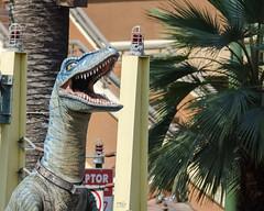 Velociraptor Yelling