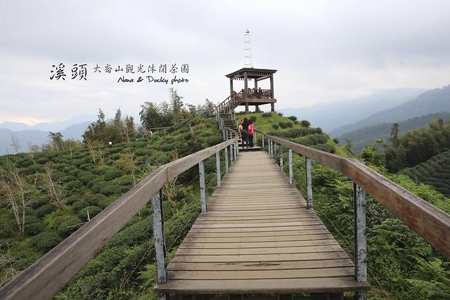 溪頭-銀杏森林-大崙頂觀光休閒茶園 (1)