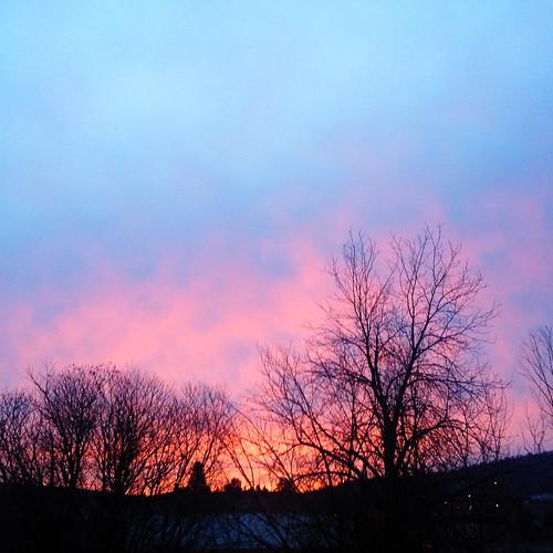 california usa tree silhouette sunrise blogged iphone yreka siskiyoucounty