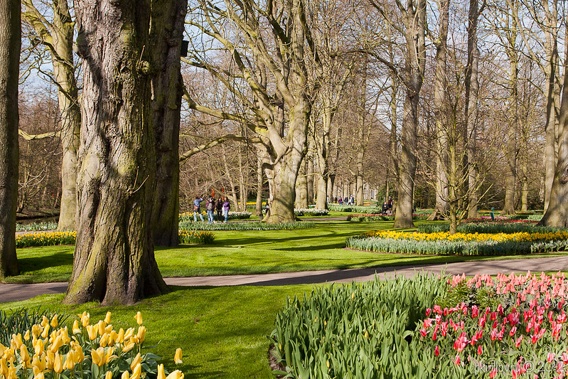 Keukenhof in March 2012
