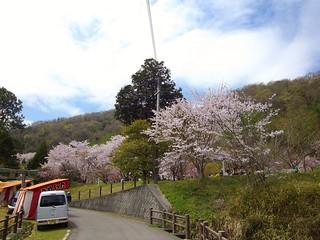 宗堂桜 #2