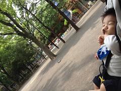 とらちゃん@恵比寿公園(2012/5/7)