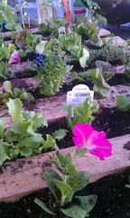 Starting pallet garden