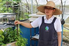 魚菜共生實驗農場主人李佳璇,固定開課推廣這套自給自足的農法。