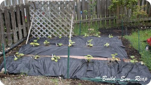 June 2013 Garden Update2