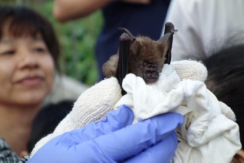閱野蝙蝠營隊