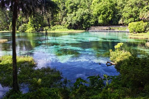 swim river rainbow snorkel florida wildlife rainbowriver dunnellon rainbowsprings squba seminolefalls rainbowspringsstatepark headsprings