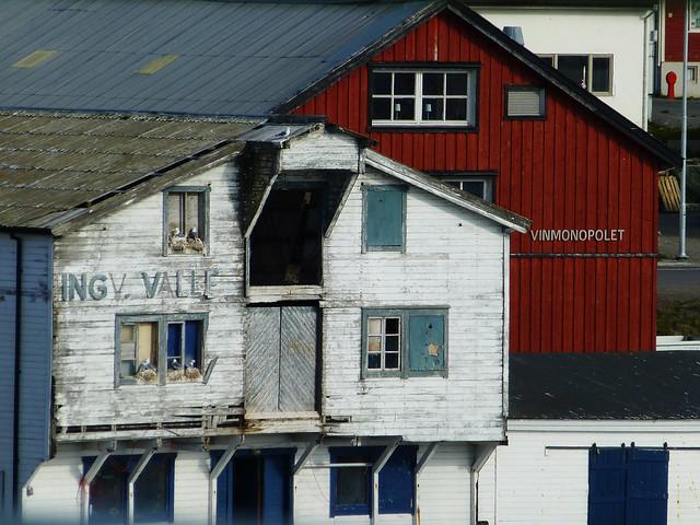 Norwegen Möwennester