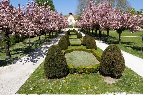 kirschblüte klagenfurt