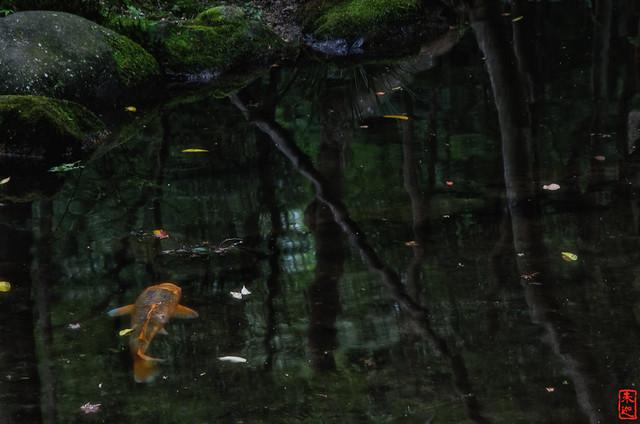 「幻」 醍醐寺 - 京都