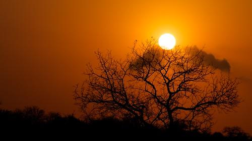 africa sun sunlight tree sol sunrise southafrica arbol sunny amanecer afrika krugernationalpark mpumalanga kruger suidafrika sudáfrica