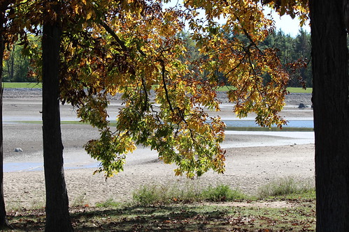 IMG_2850_Leaves_&_Dry_Lake
