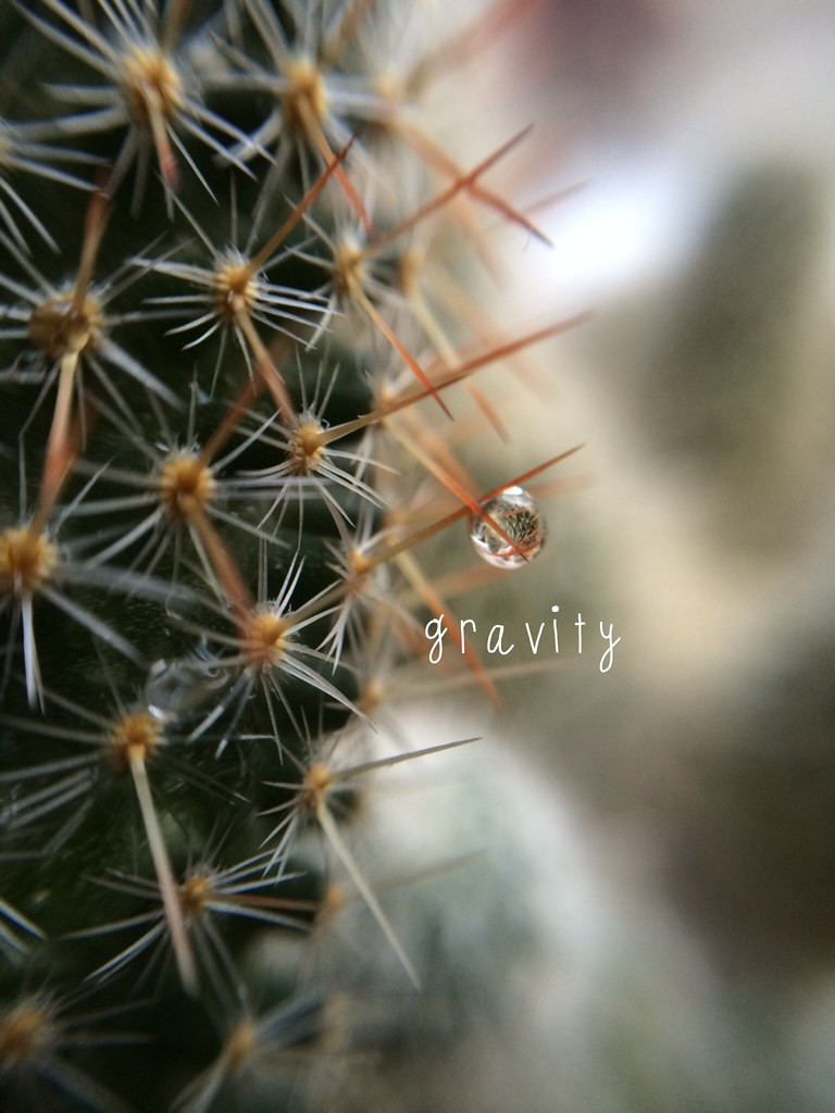 I love gravity. The mysterious force feeds cactus.