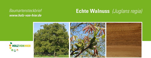 Walnuss-Header