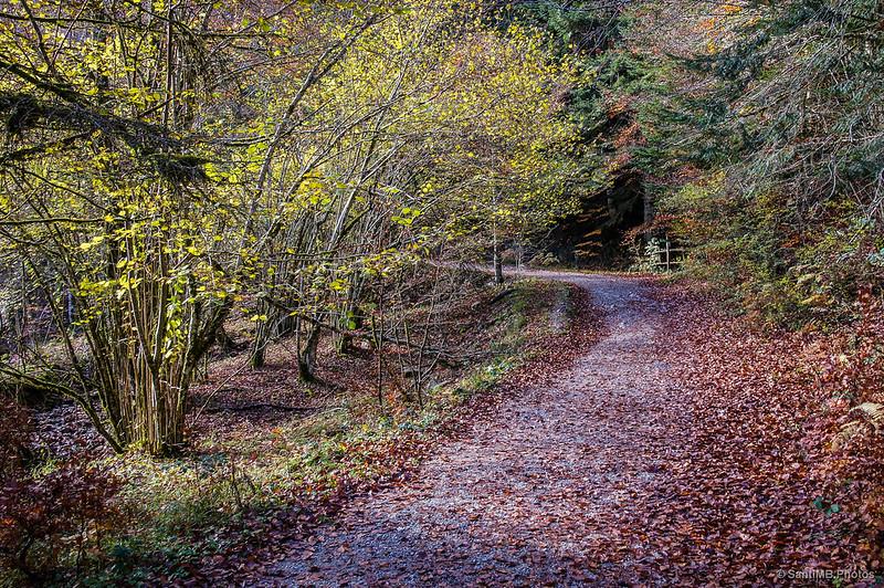 Hacia el lugar donde habita el otoño