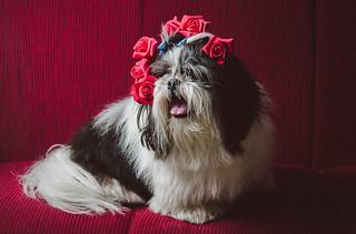 Dog + Flowers