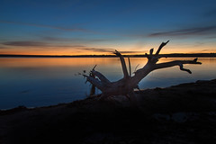 Dawn at the Lake's Edge