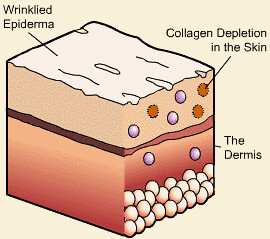 collagen skin 3