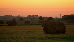 prairie, agriculture, farm, straw, hay, field, plain, plant, morning, meadow, pasture, rural area, savanna, grassland,