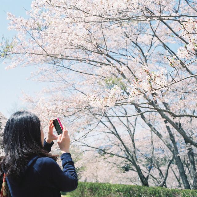 桜を撮るツマー